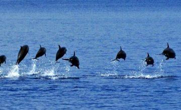Nuotare con i delfini alle Maldive