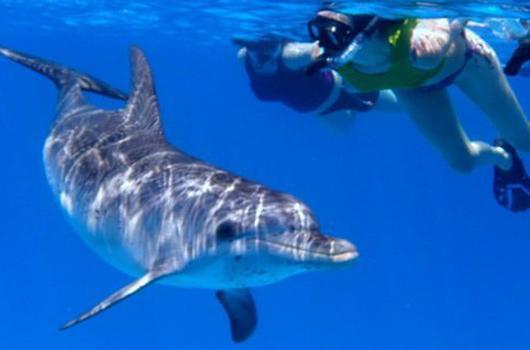 Nuotare con i delfini alle Maldive   Maldive4You by Fly4You