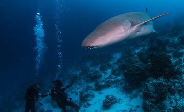 Fauna Marina delle Maldive